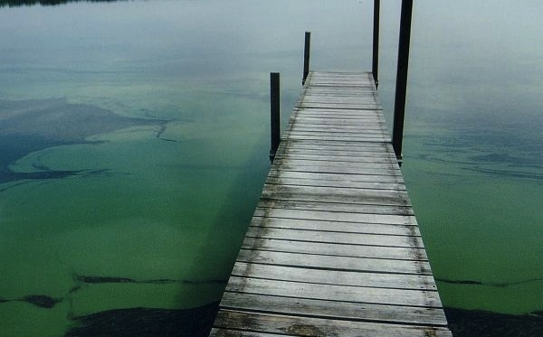 Board again sidelines Kasich's order on algae