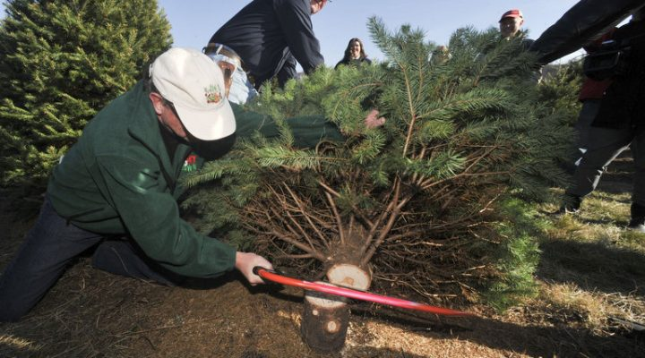 NJDA to hold Christmas tree cutting ceremony