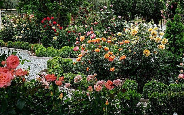 Sign up for Master Gardener training