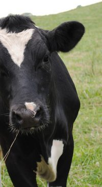 Benton County Dairy and Forage Field Day Aug. 12