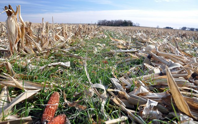 Paid-in-full, managed cover crops program