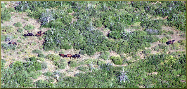 National Park looking to remove 'trespass horses'