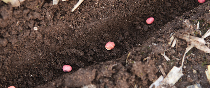 Neonicotinoid Seed Treatments in Soybean