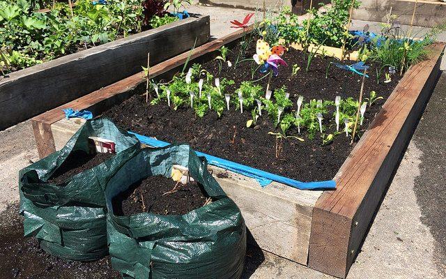 Gardening is healing