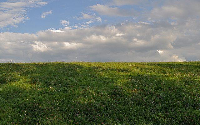 clover pasture
