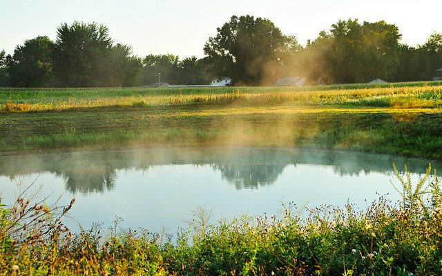 Farm Ponds Fish Kills And Oxygen Morning Ag Clips