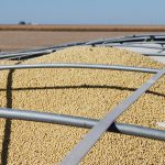 harvested soybeans