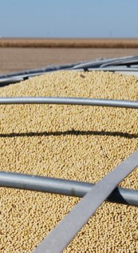 Kansas farmers compete on soybean yields, values