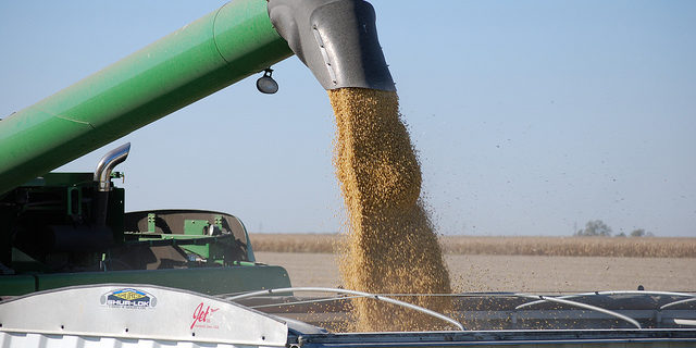 Soybean production breaks record high