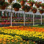 greenhouse plant nursery