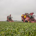 harvesting wet field