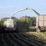 Chopping corn silage. (Jess Johnson via Flickr)
