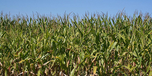 Colorado Corn on proposal to rescind WOTUS