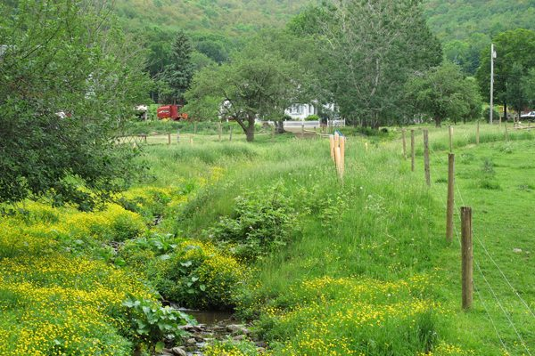 """Stream fencing protects against animal waste and streambank plantings create a """"buffer strip"""" that filters pollutants from the water. (USDA via Flickr)"""