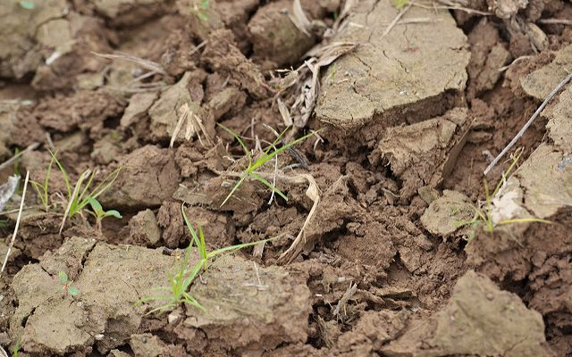 Soil cation ratios versus sufficiency levels