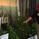 MN Soybean Director of Research David Kee explains the soybean varieties to a Farmfest attendee. (Minnesota Soybean Growers Association)