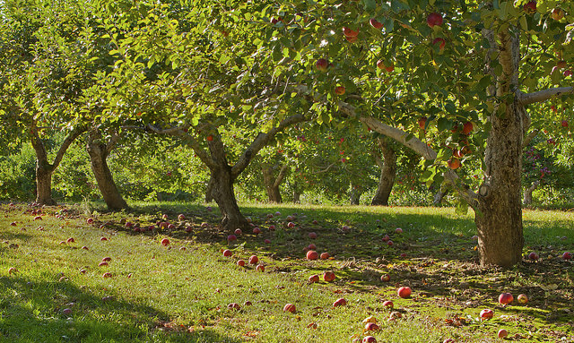 Celebrate Michigan Apple Month