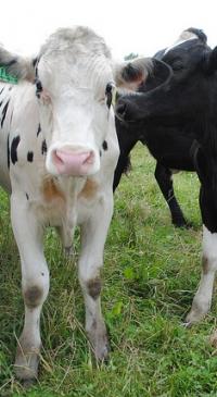 2019 Dairy Quiz Bowl Contest