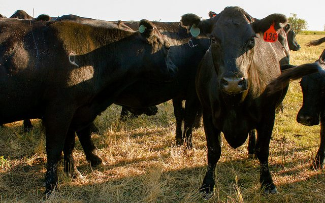 2018 Beef Feedlot Roundtables