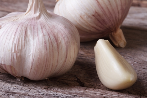 Garlic Workshop to take place at the EARTH Center