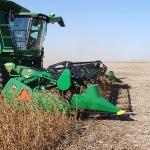 soybean harvest