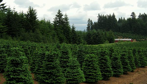 Warren Co. a Christmas tree belt of New Jersey