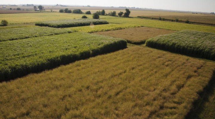 Database confirms top U.S. bioenergy crop