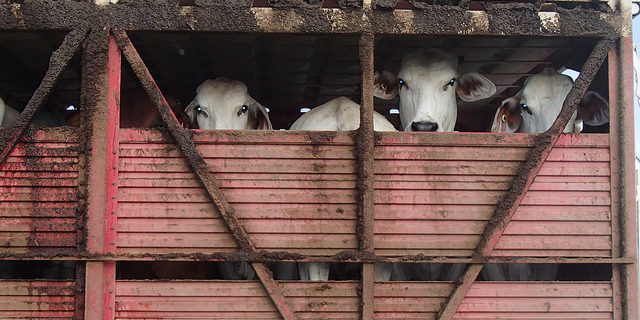 Funds to promote livestock exports