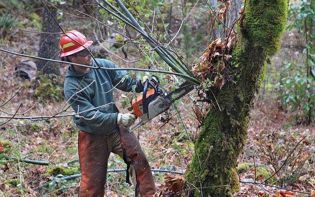 chain saw, chainsaw