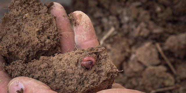 Texas Soil Health Short Course