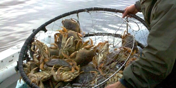 Dungeness crabbers on strike