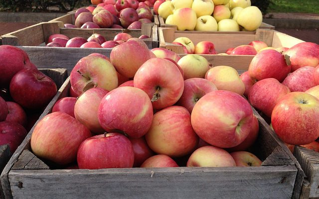 Apple growers expecting bountiful harvest