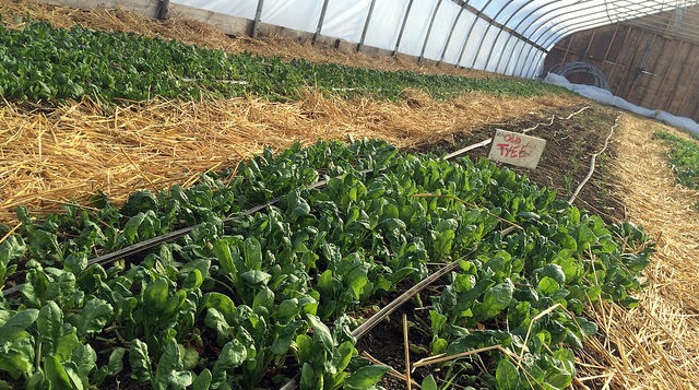 High demand for farm to table in winter