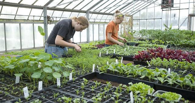 Greenhouse management program