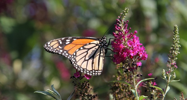 School creates butterfly garden