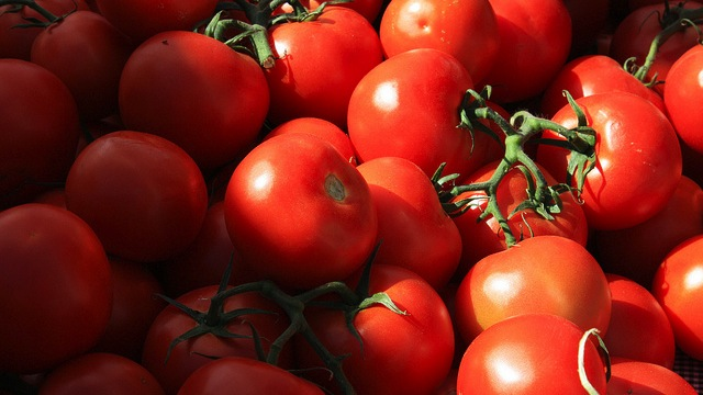 Key to restoring great tomato flavor