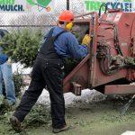 mulching Christmas tree