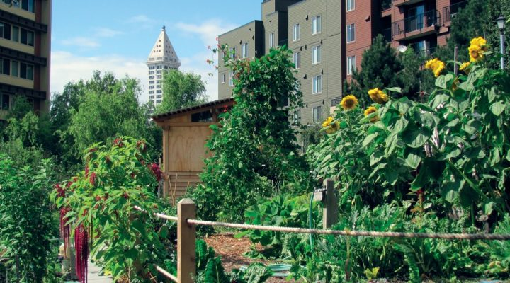 Urban Agriculture Educator sought