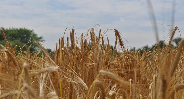 Hudson Valley Value-Added Grains School