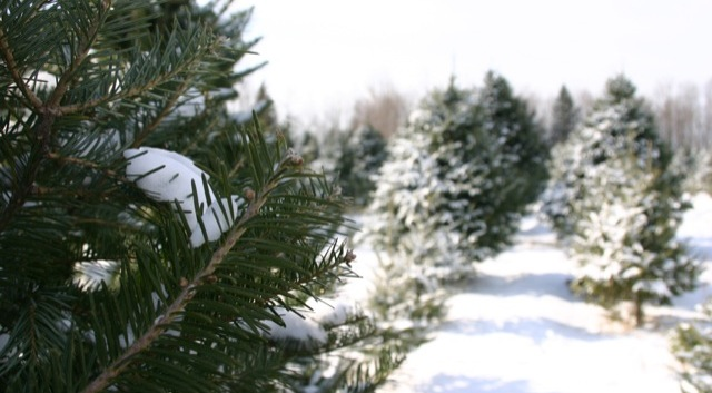Christmas tree farmers gather Jan. 26-28