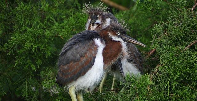 Imperiled Species Management Plan