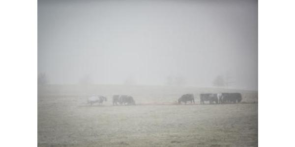 winter livestock