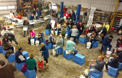 George VanHoutte's farm shop turns into a kraut-making floor. (MSU Extension)
