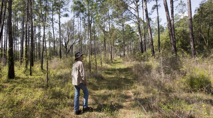 Voters want to preserve forests, water