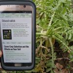 Redesigned Midwest Cover Crops Council website makes cover crop information mobile-friendly and more available in the field. (MSU Extension)