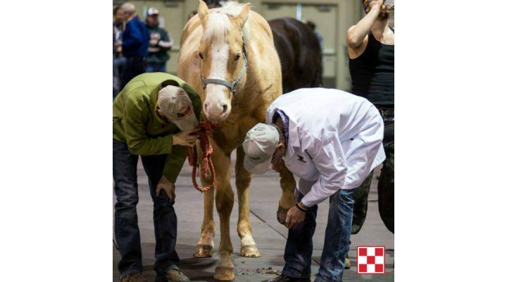 Horse hoof health & nutrition