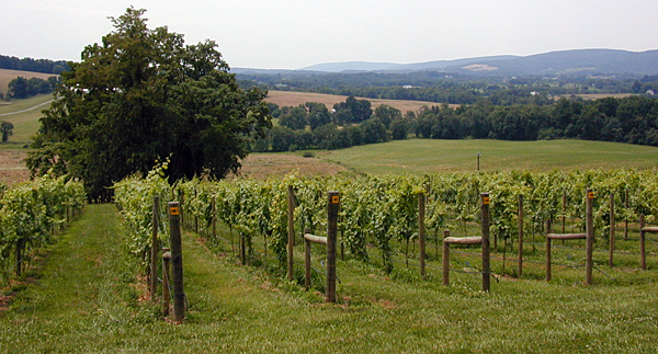 Vineyard expansion grants available