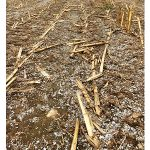 """Paper mill residuals, or """"sludge,"""" are a soil amendment available to farmers in Michigan's Upper Peninsula. Paper mills are located in Dickinson, Delta and Menominee counties. (Monica Jean, MSU Extension)"""
