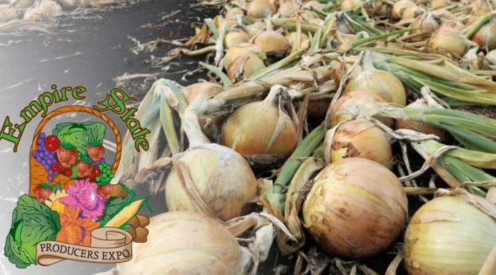 Ensuring quality in small-scale onions