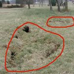 Figure 1. Cover-collapse sinkholes (outlined in red) in eastern Bullitt County, KY are typical in areas of karst geology. (Photo by B. Davidson, KY Geological Survey.)